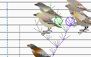 Darwin's Finches interactive animation
