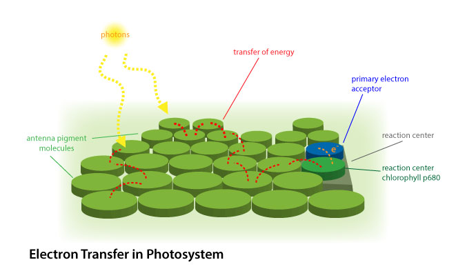 Electron transfer in photosystem 2