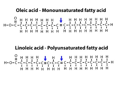 Monounsaturated vs polyunsaturated